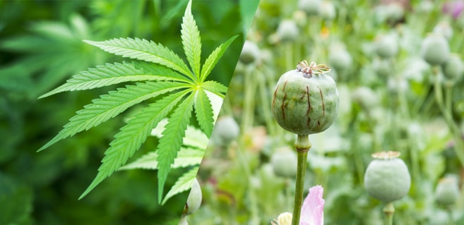 Cannabinoids & Cannabis