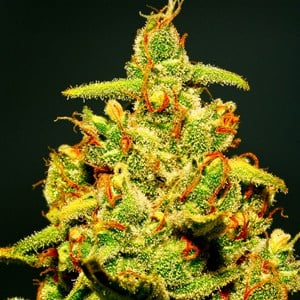 blog-cannabisoverview-B