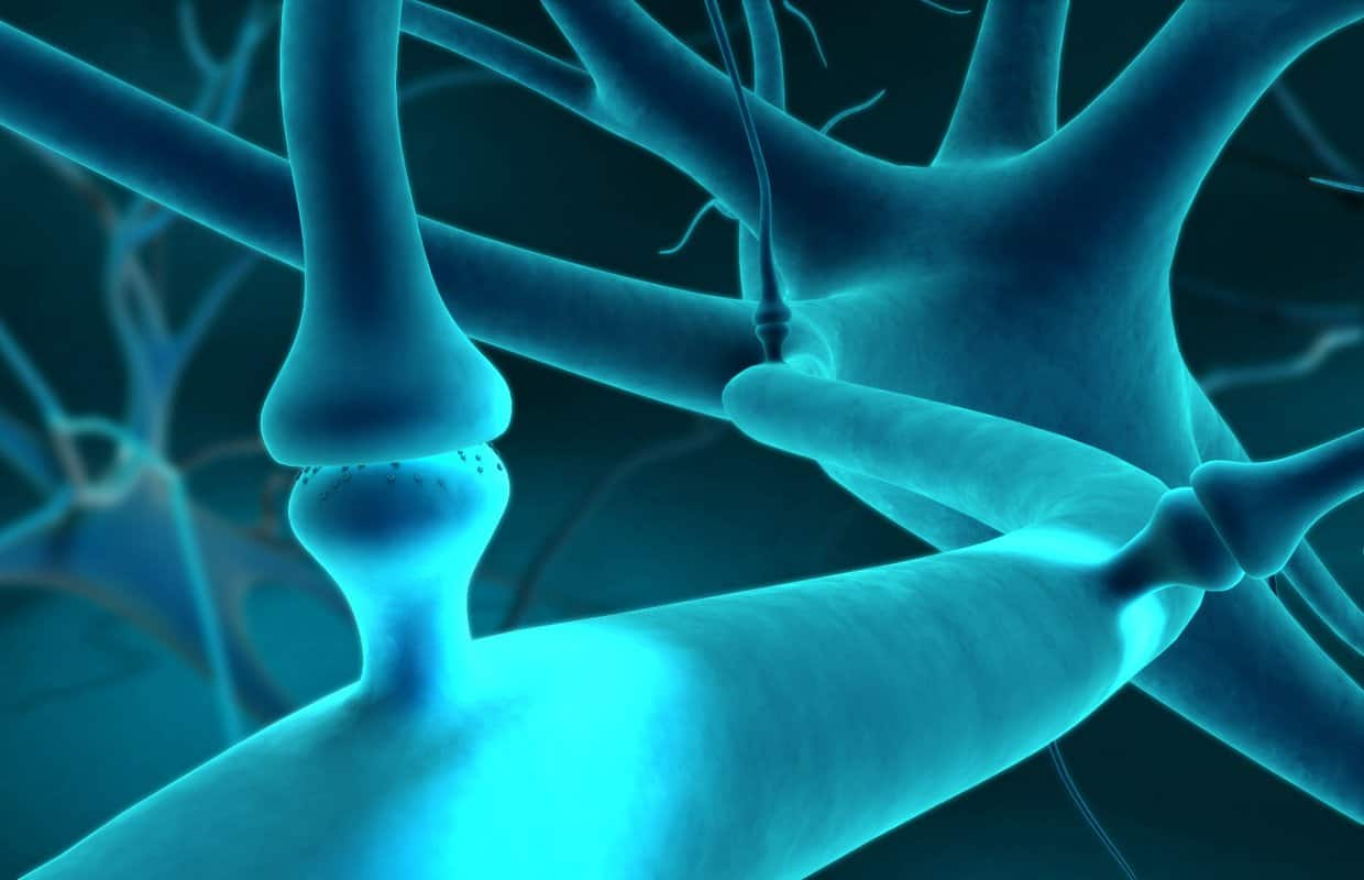 What You Need to Know About the Endocannabinoid System.