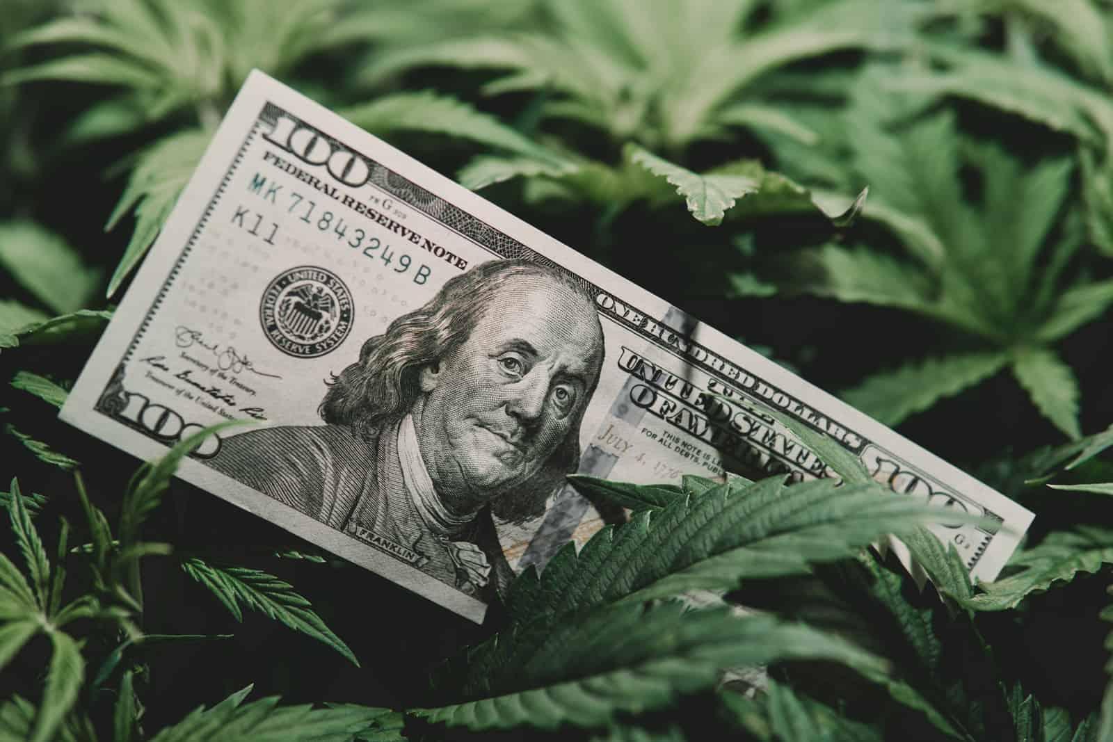 Tax Revenues from Marijuana Legalization. $100 bill on weed plant.