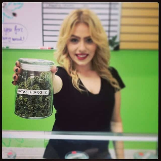 Budtending in a Medical Marijuana DIspensary