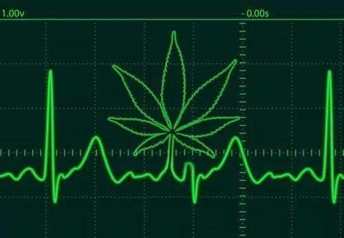 Canada Cannabis Laws
