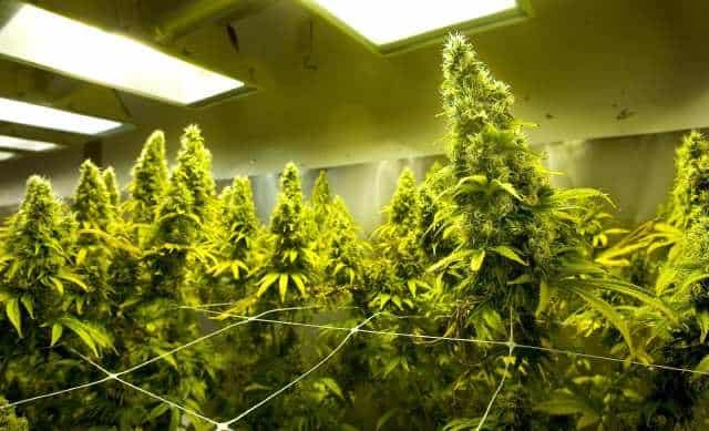 Compare Marijuana Schools