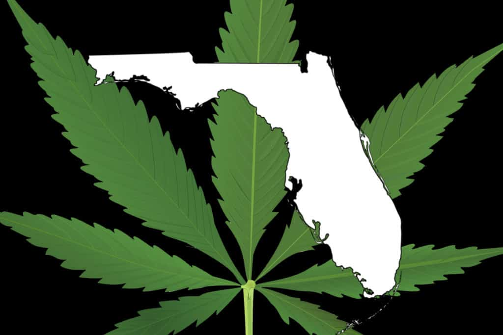 Tampa cannabis college