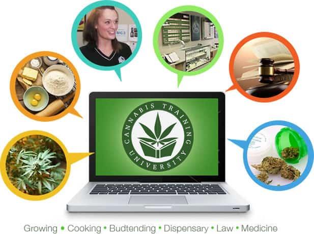 Best Marijuana Schools