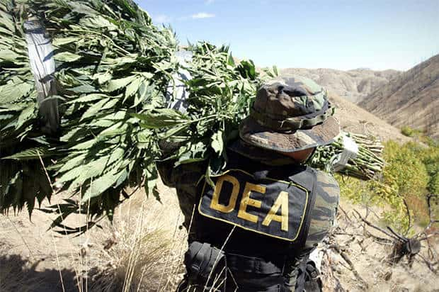 Drug Enforcement Agency Incompetence. DEA agent confiscating weed.