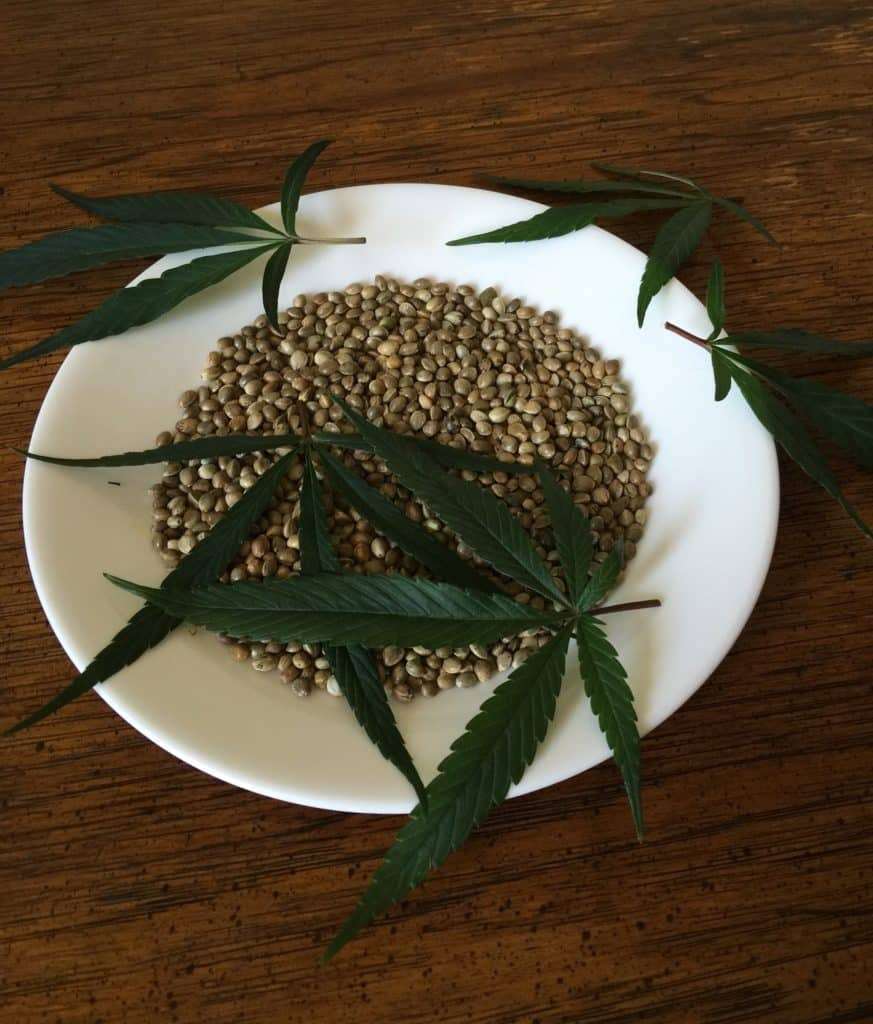 How to Feminize Cannabis Seeds. Plate with seeds and pot leaves.