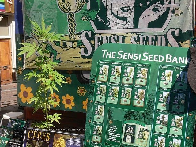 Storing Marijuana Seeds