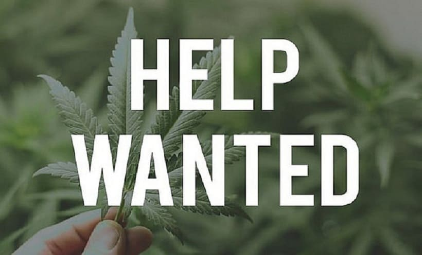 Top Weed Jobs Nationwide