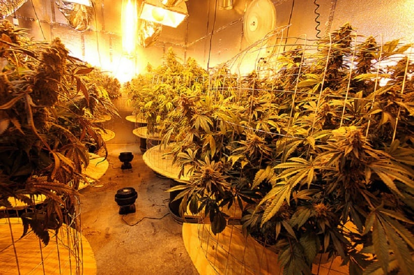 Influencing Factors for Marijuana Growing Season