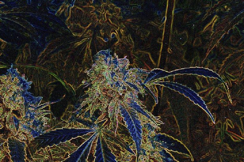 Marijuana Training Institute Program Admission