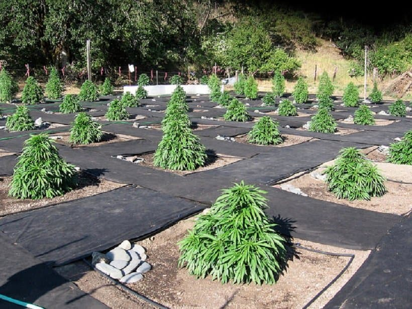 How to Grow Marijuana in Various Climates