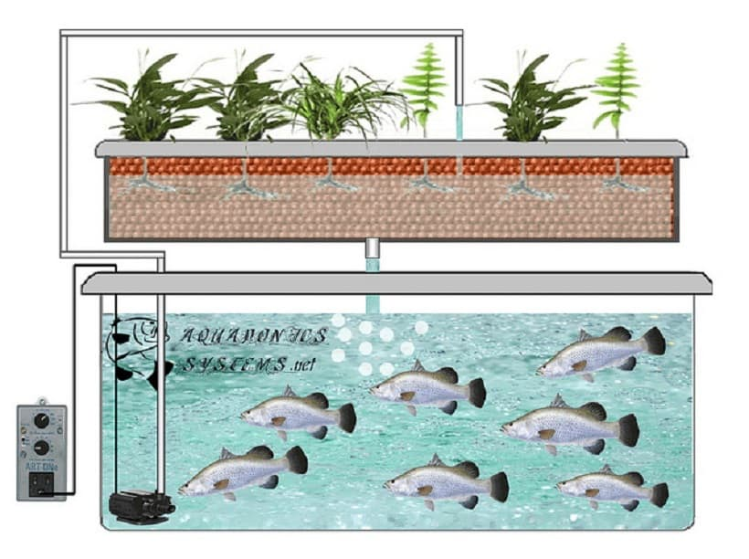 How to Grow Cannabis With An Aquaponic System