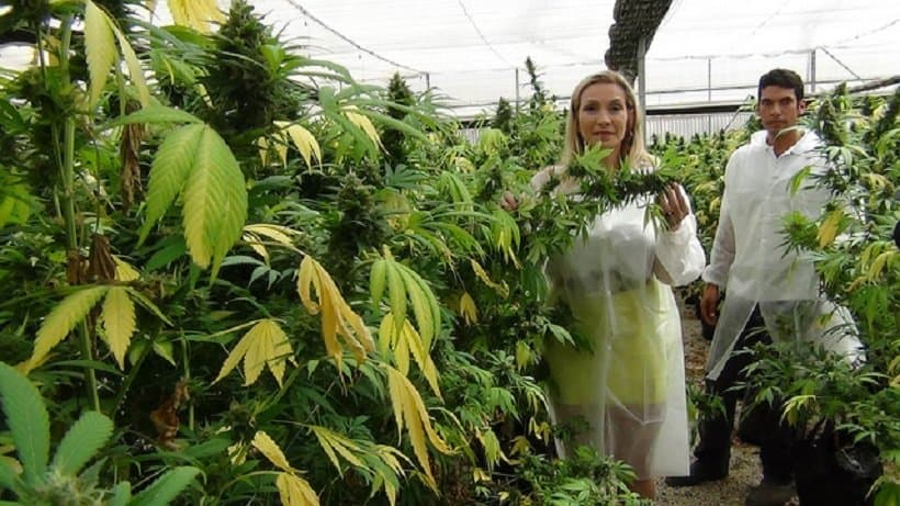 A Look At The Cannabis Tourism Industry. Two people looking at weed plants.