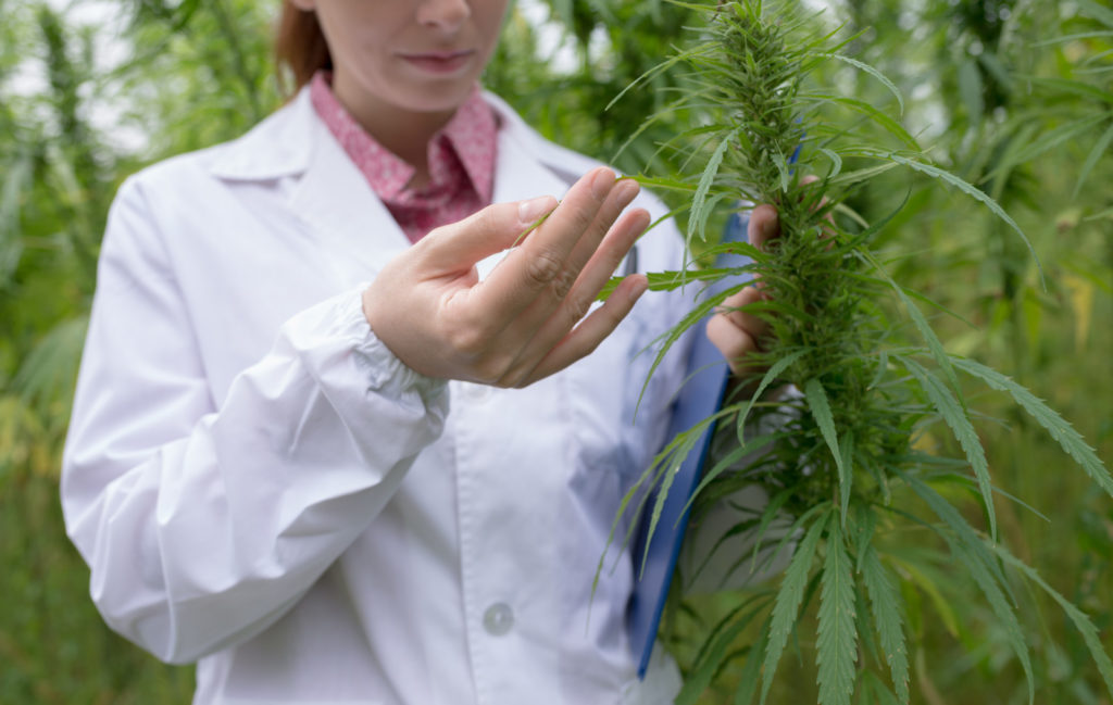 How to Test The Potency of Your Cannabis