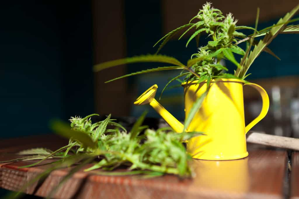 Understanding Water PPM In Growing Cannabis