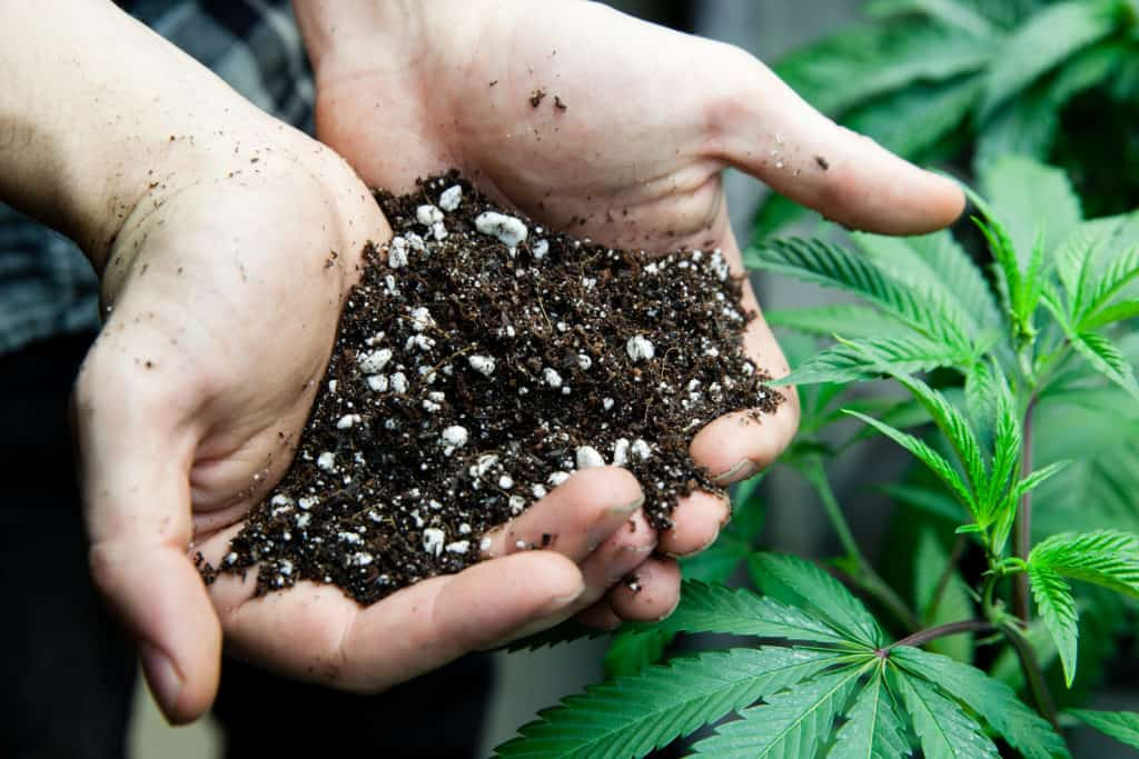 Steps To Crafting The Perfect Cannabis Soil