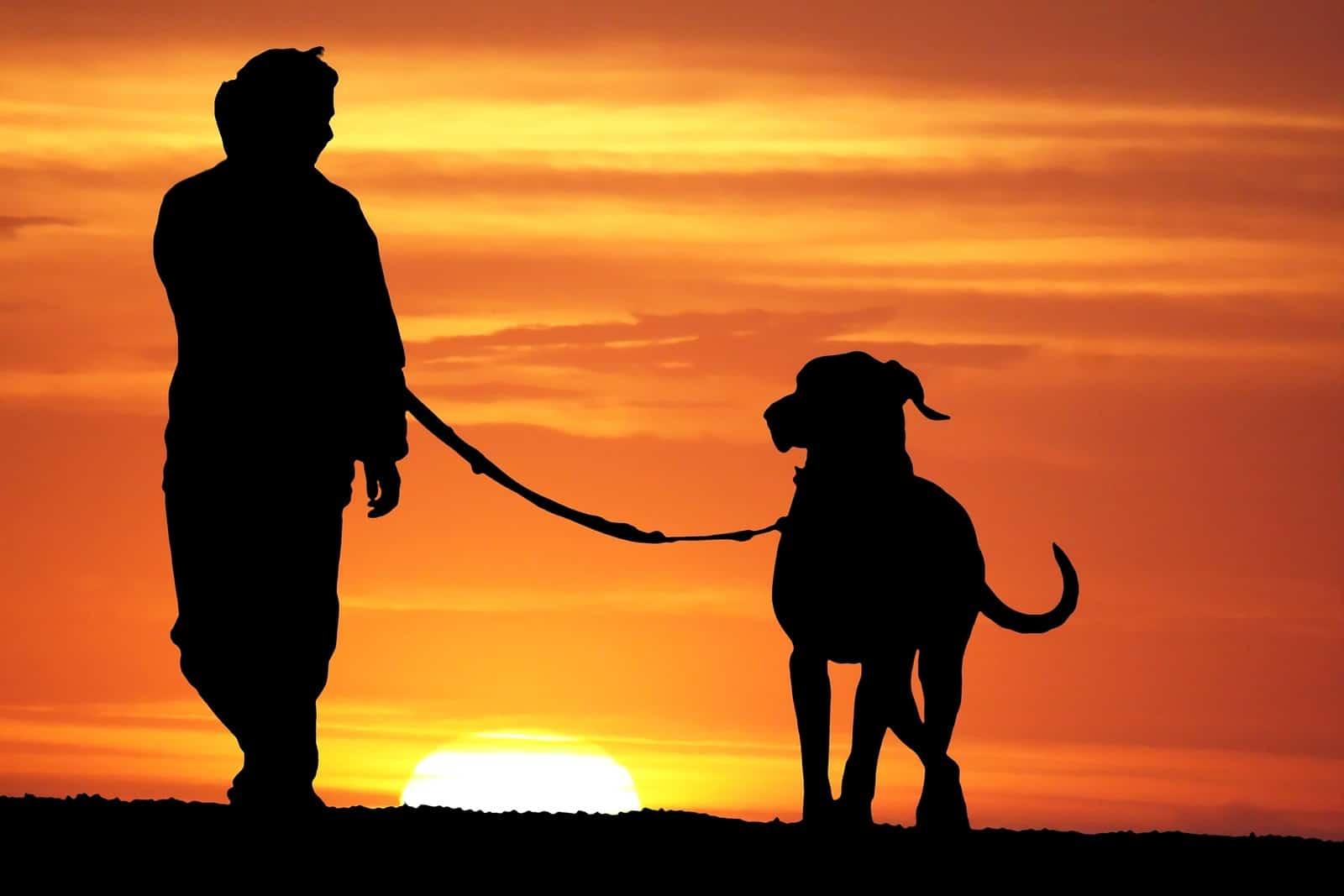 Five ways cbd pet treats can benefit your canine. Man walking dog.