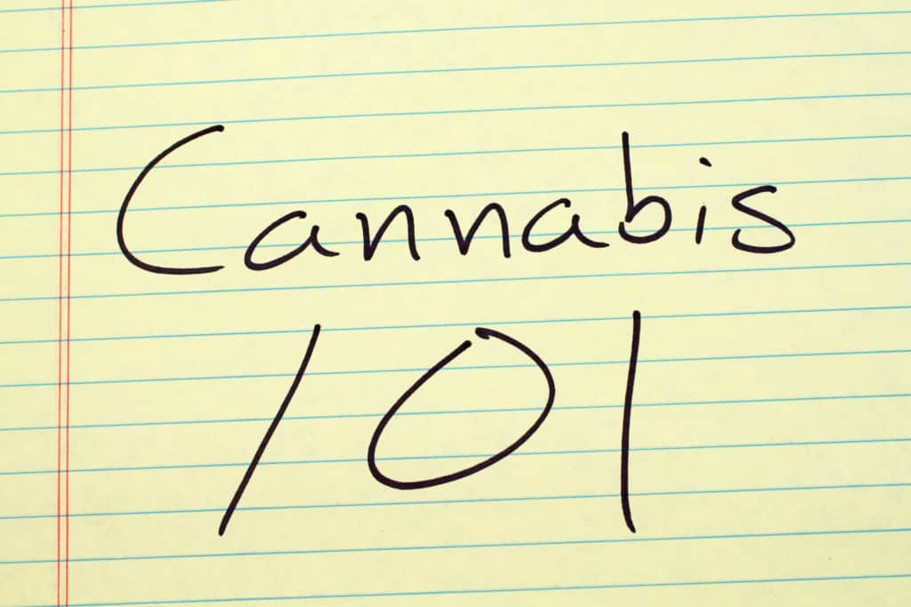 Back To School: Now Is The Perfect Time To Start Your Cannabis Training