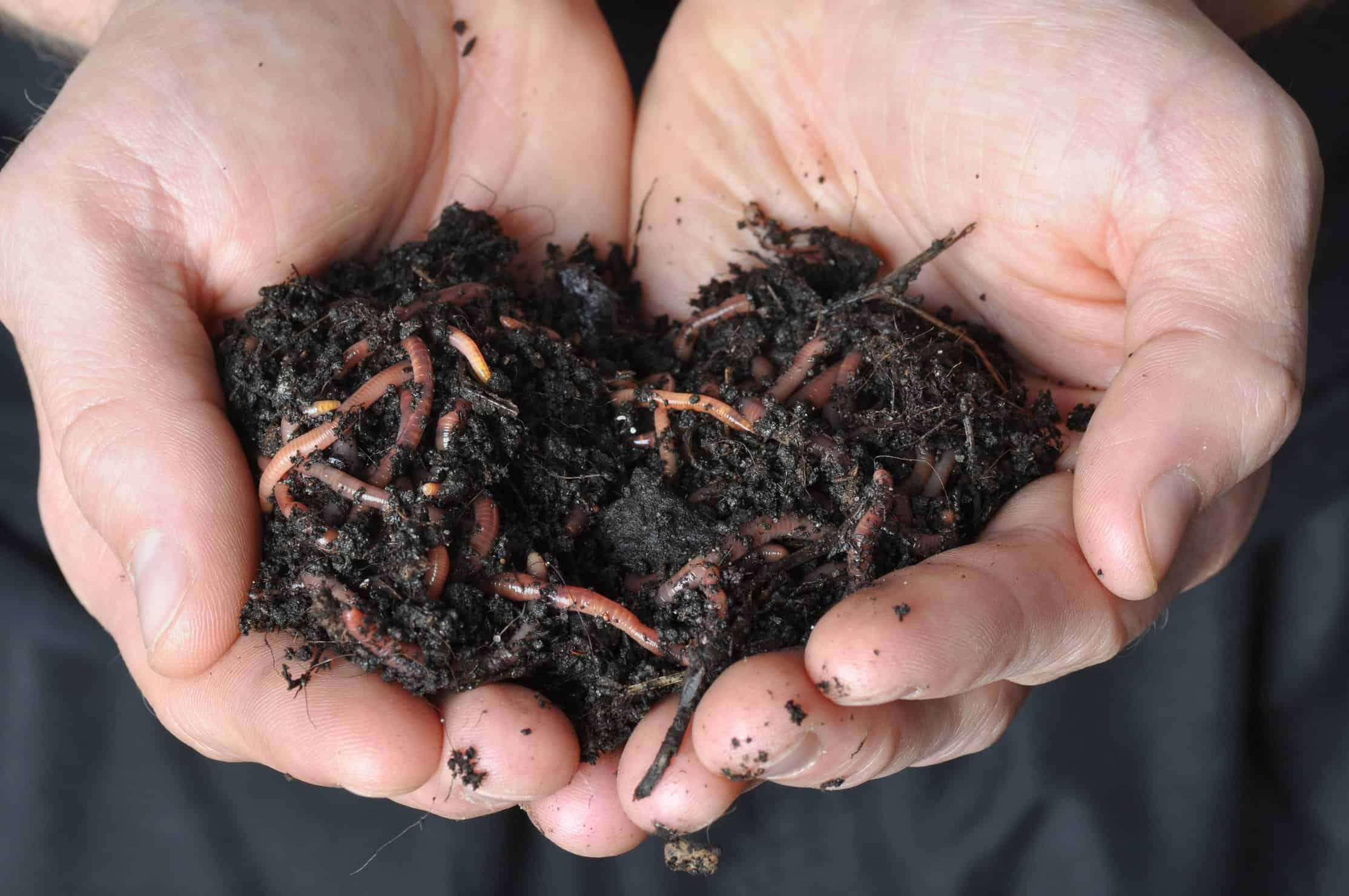 Benefits of earthworm castings to your marijuana plants