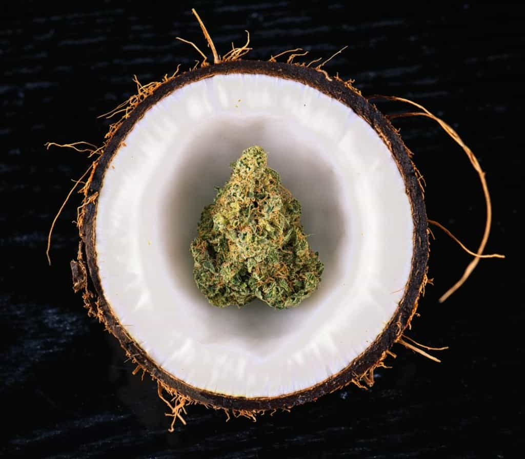 Coconut Water As Organic Cannabis Fertilizer