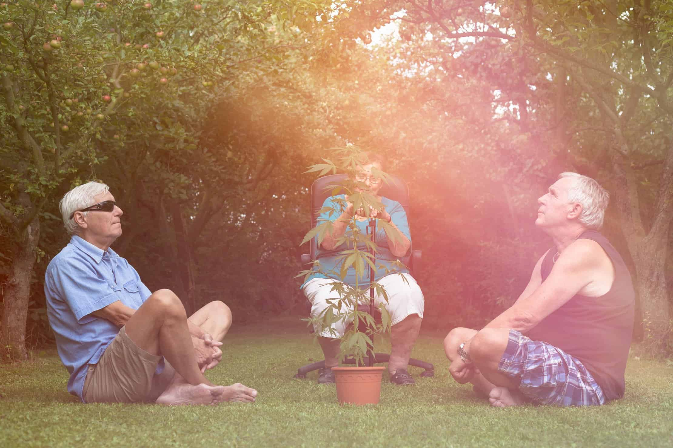 How baby boomers can get back to marijuana use. 3 people around a cannabis plant.