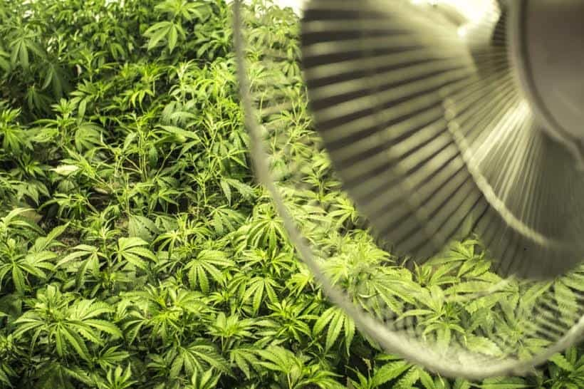 How to Control Cannabis Grow Room Climate