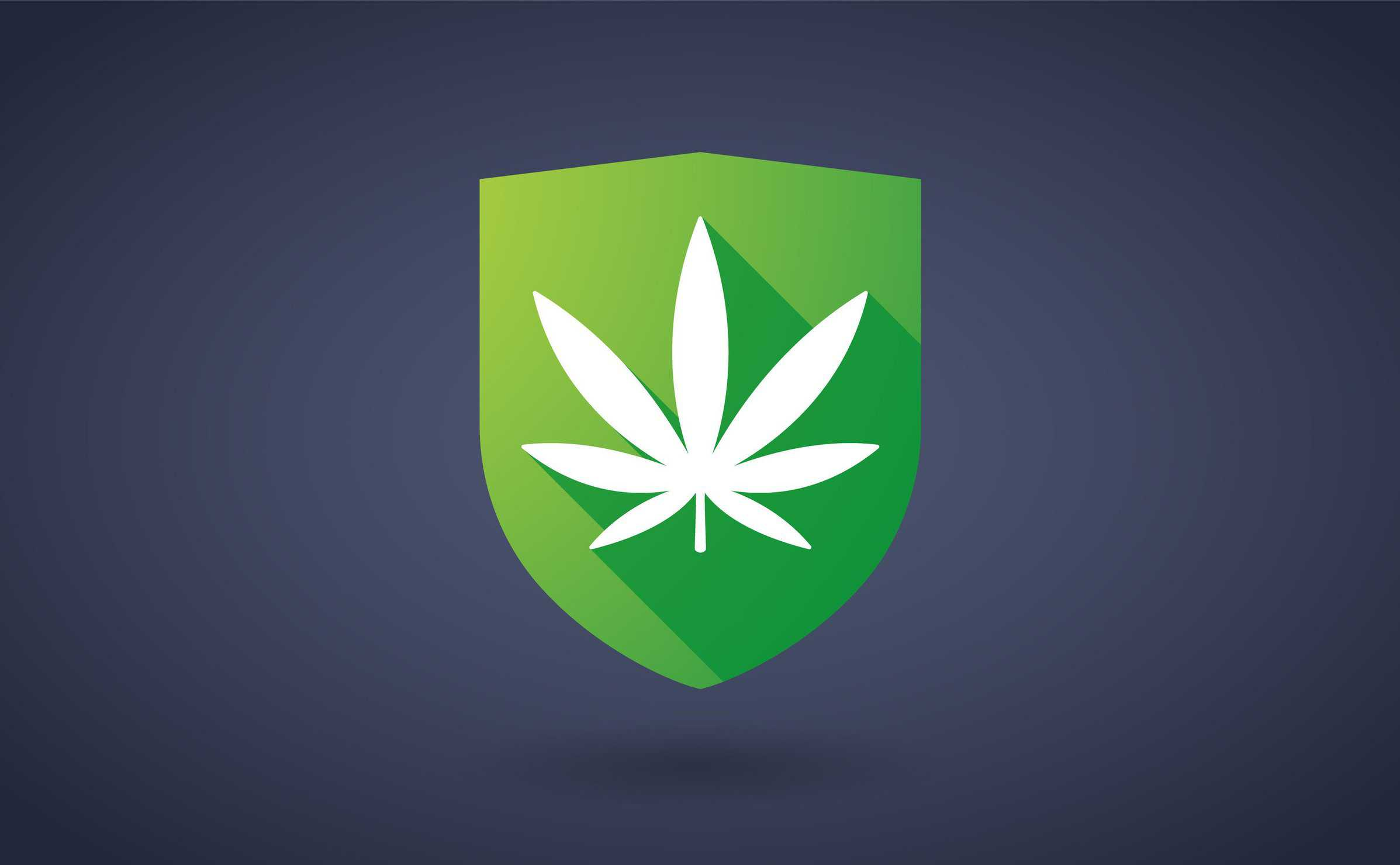 Top Security Tips For Your Marijuana Grow. Cannabis leaf in a shield.