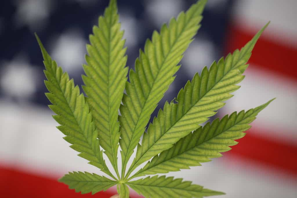 How the 2018 Midterm Election Made It Easier to Access Cannabis