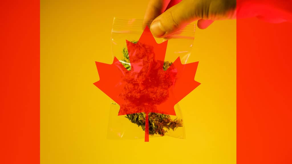 What Happens to Grey Market Cannabis Dispensaries After Legalization?