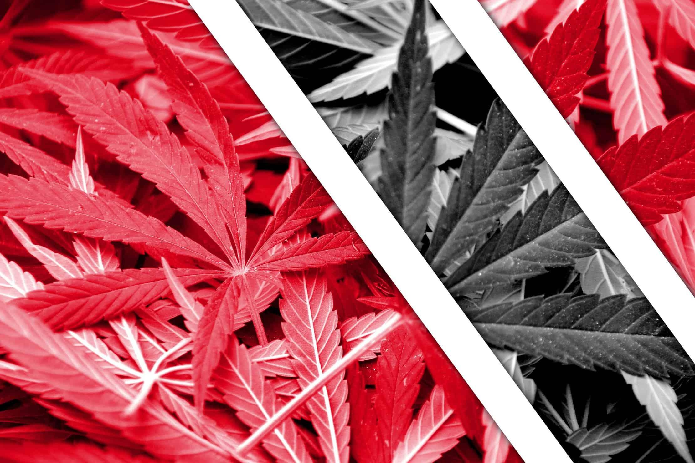 Caribbean Cannabis News in 2019