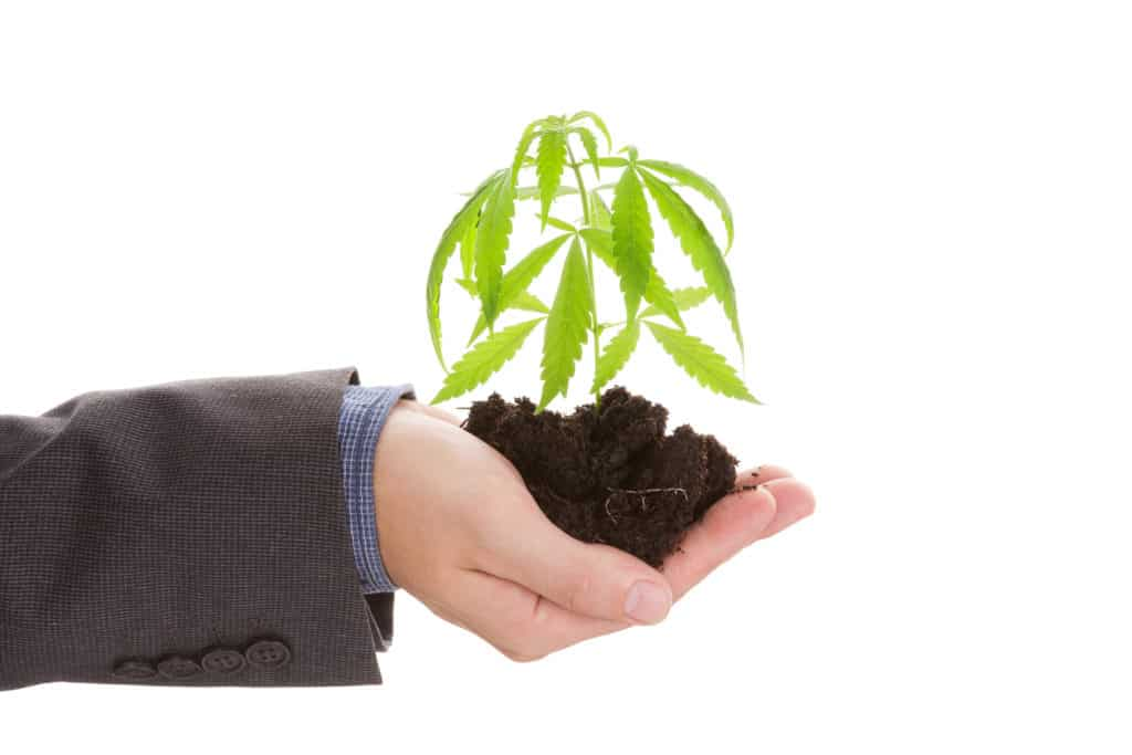 How to Secure Employment in the Cannabis Industry