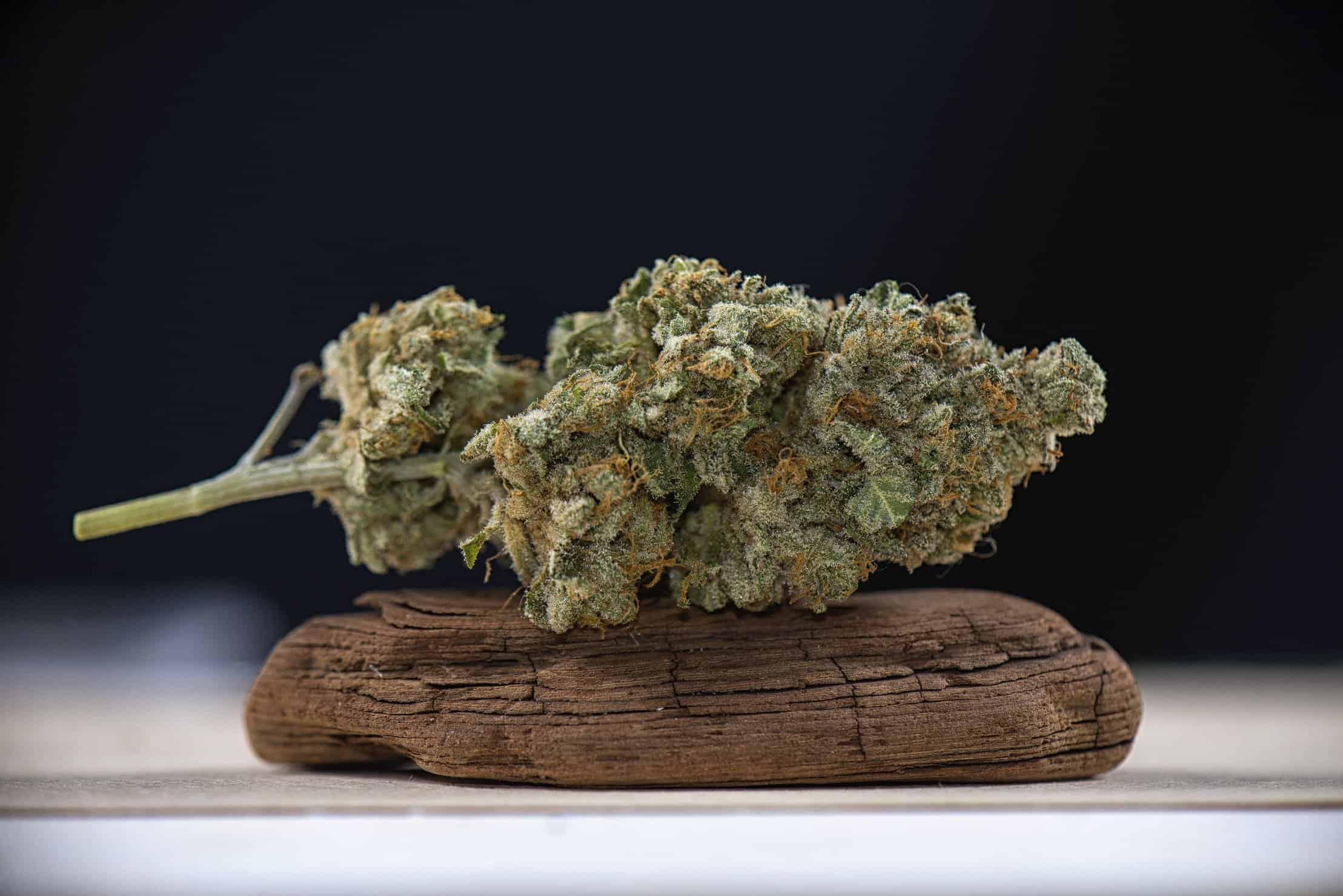 The history of marijuana in Islamic countries. Bud on a rock.