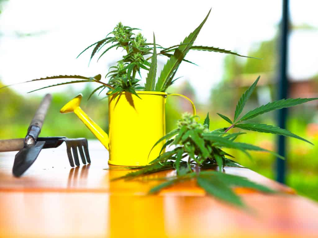 Tools Every Cannabis Grower Should Own
