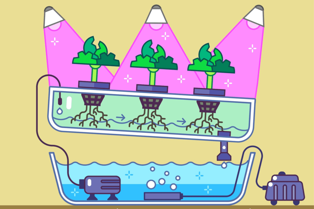 The Nutrient Film Technique For Growing Cannabis