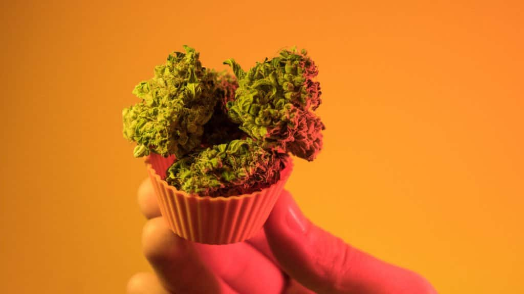 Important Tips for Maximizing Cannabis Flavor