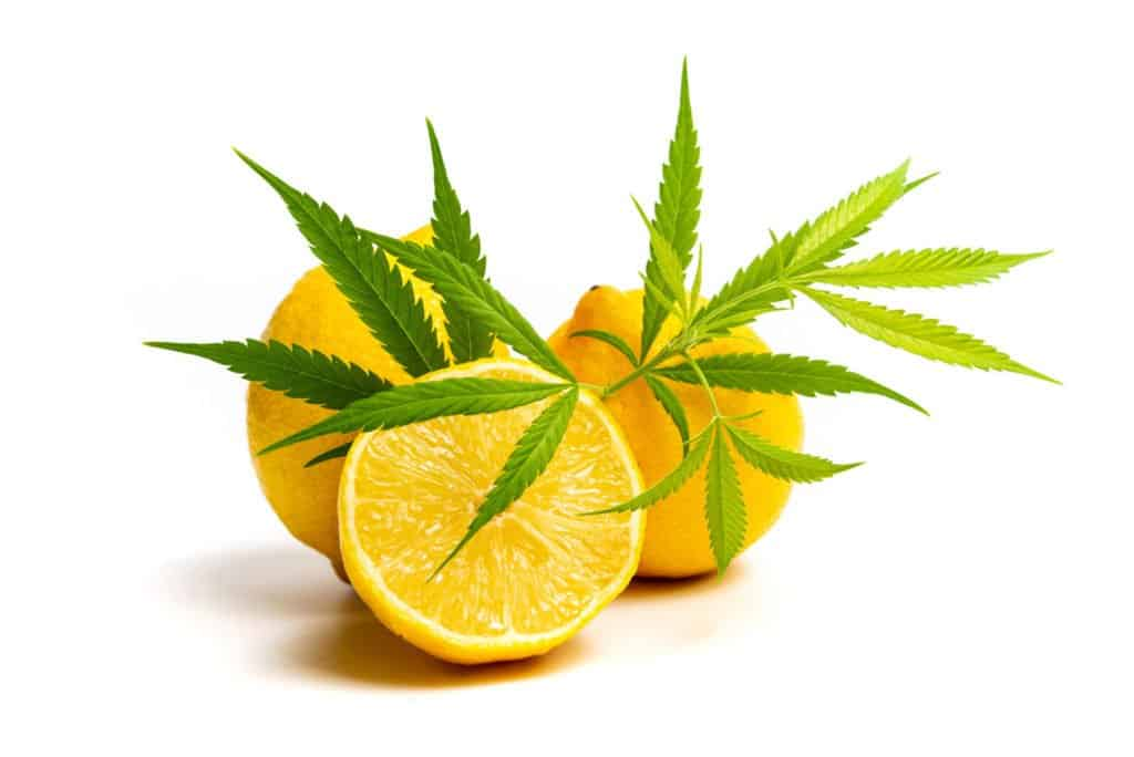 Limonene: A Cannabis Terpene Profile