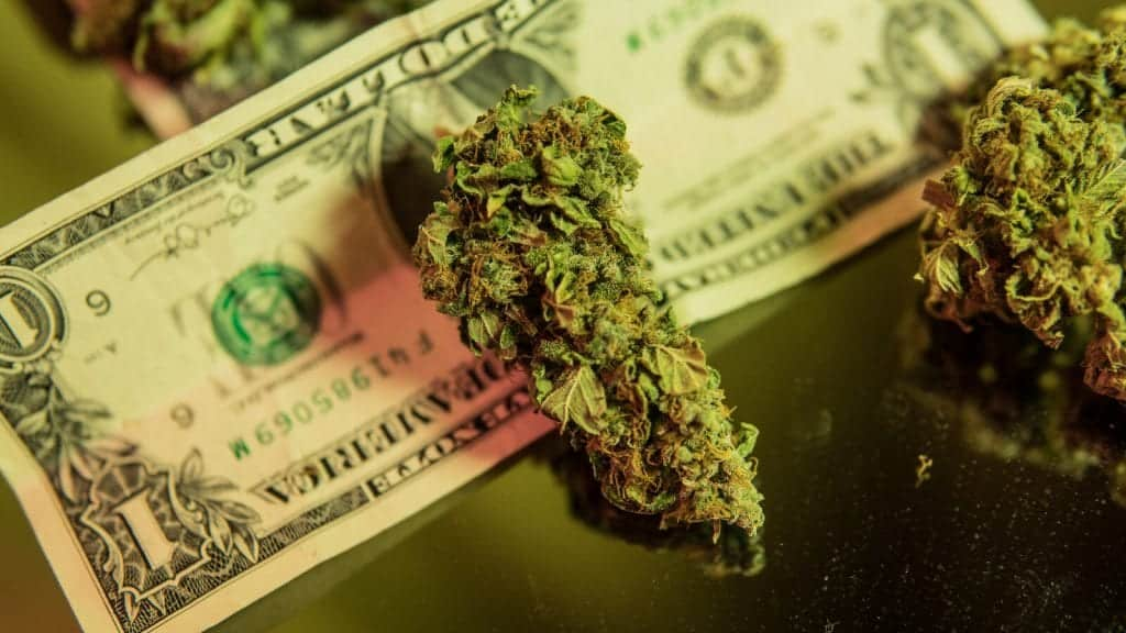 Tips for Being A Successful Cannabis Business Owner