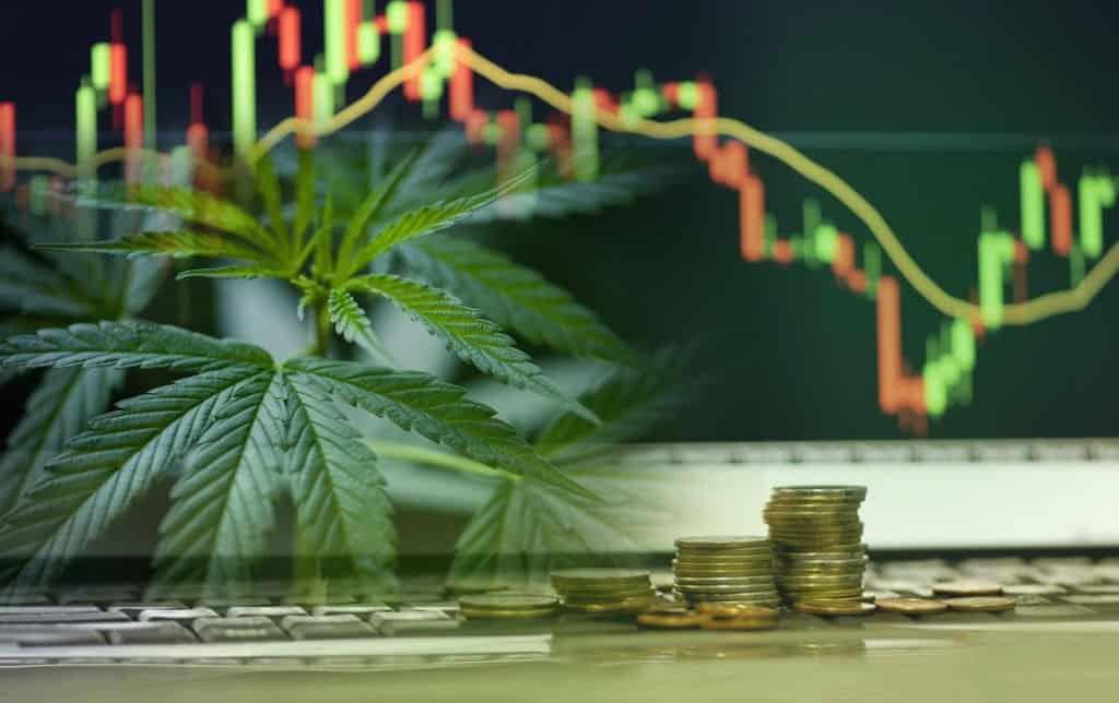 A Look Into Aurora Marijuana Company and Its Stock. Marijuana leaves with a chart behind it.