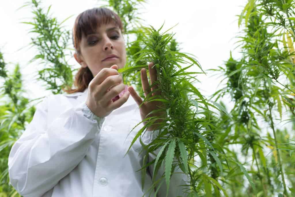 Cannabis Questions That Researchers Have Asked