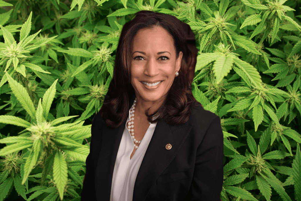 Cannabis Viewpoint of Presidential Candidate Kamala Harris