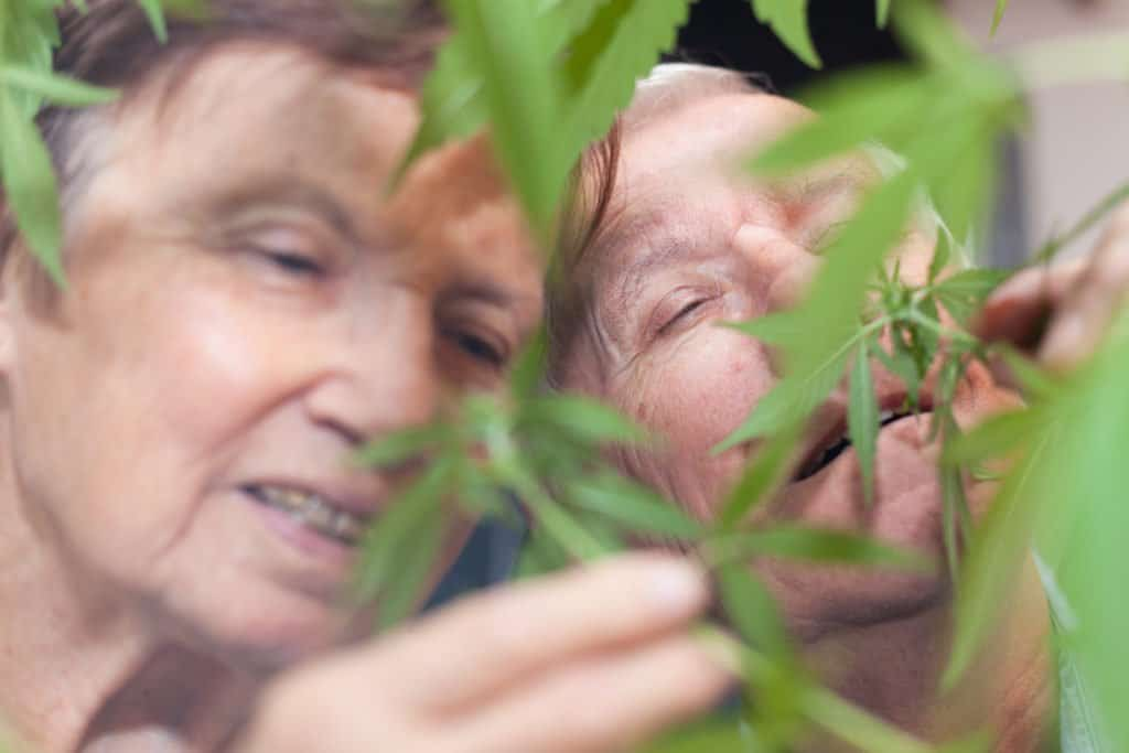 Medical Cannabis Programs in Nursing Home. Two men looking at marijuana plants