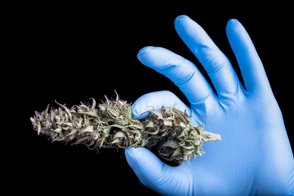 The Intricacies of Patents in the Cannabis Industry
