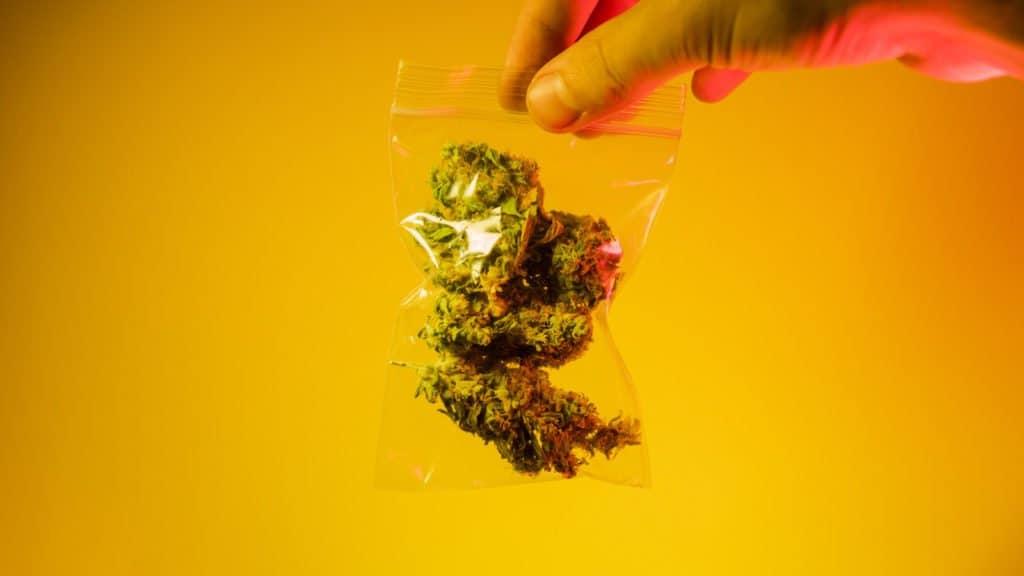 Cannabis in a bag. OG Kush strain.