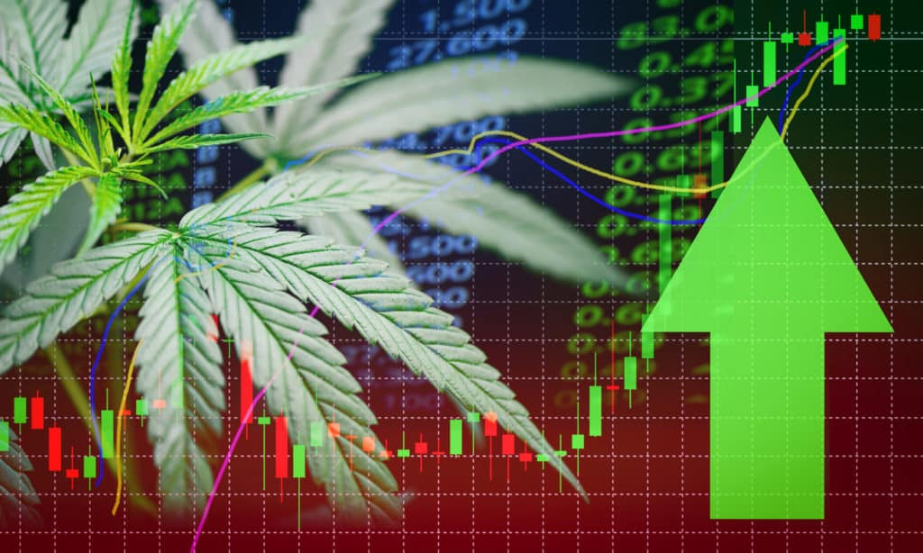Cannabis Stock Bubble