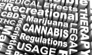 Marijuana stocks surge. Cannabis stocks way up.