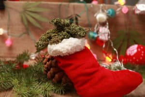 Cannabis strains for Christmas.