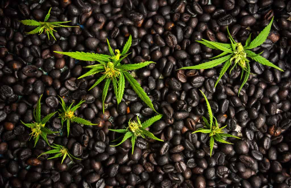 SpaceX Will Send Hemp and Coffee To Space