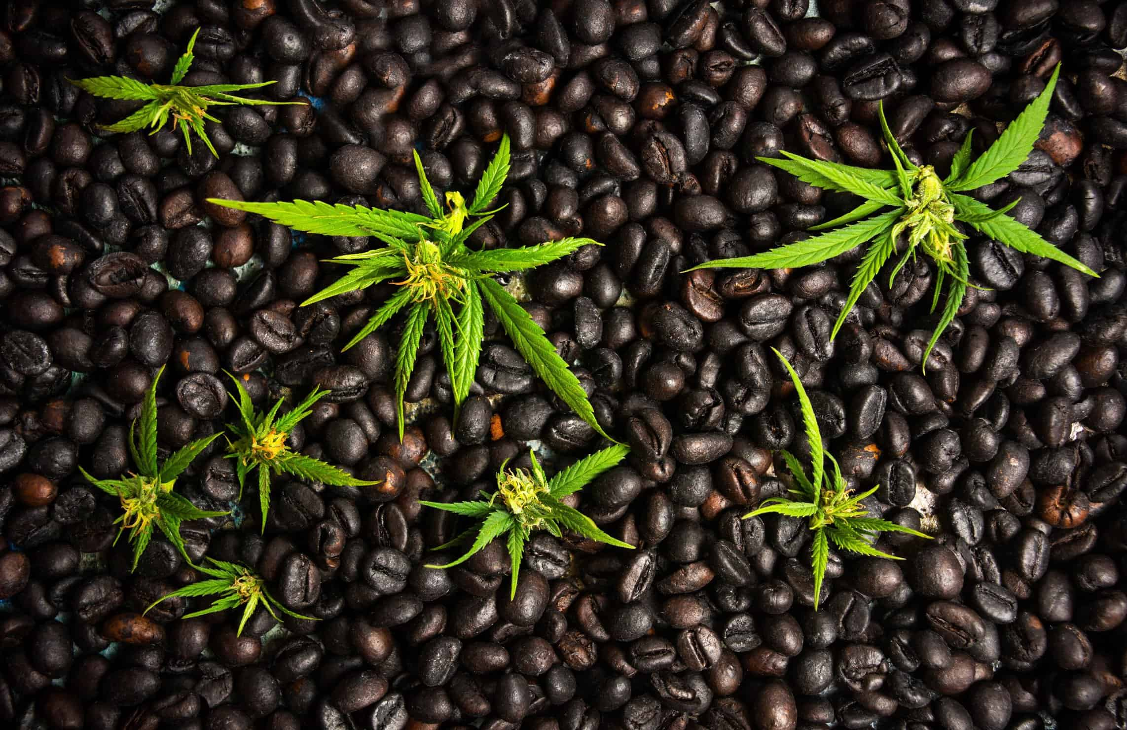 Hemp and coffee will be sent to space via SpaceX