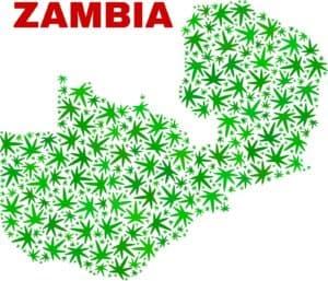 Africa cannabis laws. Africa marijuana. African marijuana growing.
